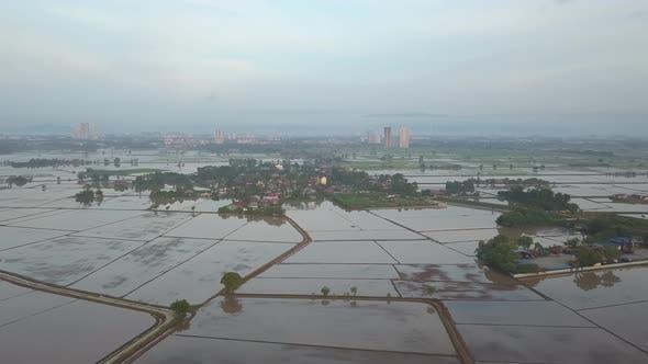 Aerial view Malays kampung near paddy field plantation