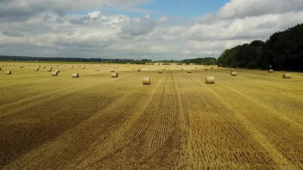 Thumbnail for Hay Bales on the Field