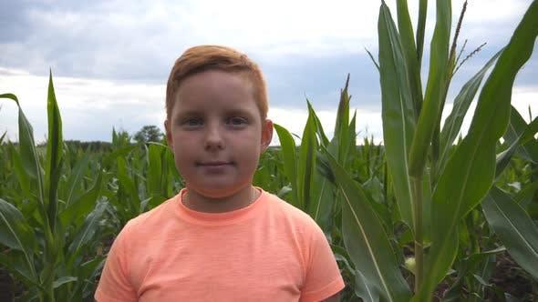 Thumbnail for Nahaufnahme von jungen rothaarigen Jungen Blick in die Kamera vor dem Hintergrund von Maisfeld bei Organic