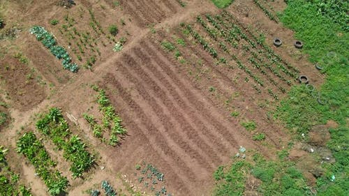 Aerial View of Unrecognizable Person Farming