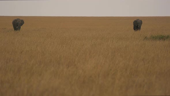Two elephants with a calf