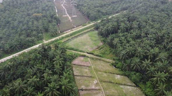 Powerline tower built in plantation