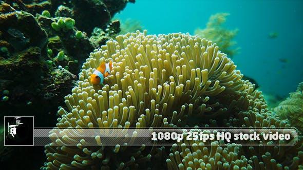 Thumbnail for Underwater World 5