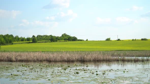 Cover Image for Reeds On The Background Of The River And Field 3