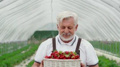 Aged Gardner Smelling Sweet Strawberries Outdoors