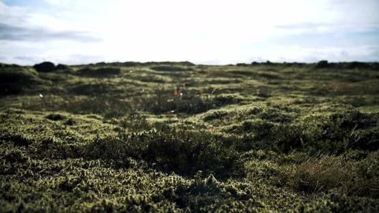 Thumbnail for Iceland Lava Field Covered with Green Moss From Volcano Eruption. Move Camera Midle Shot. Move