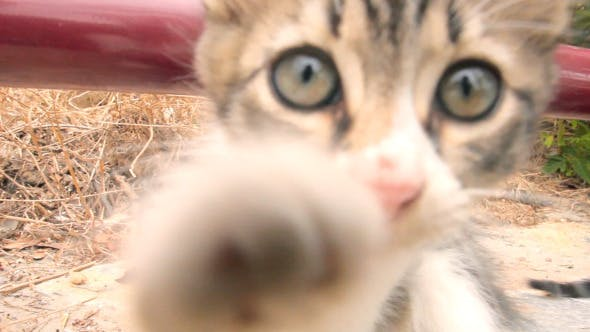 Thumbnail for Playful Kitten