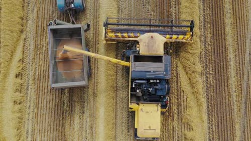 Top view on agricultural machinery. Combine harvester pouring out grains