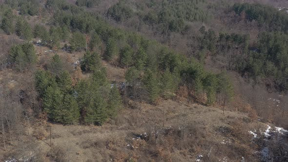 Thumbnail for Coniferous forest on mountain glade 4K aerial footage