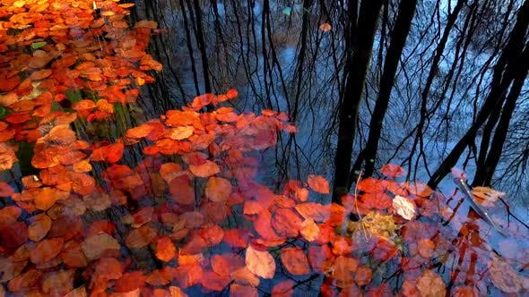 Reflection of autumn trees in water with fallen leaves.