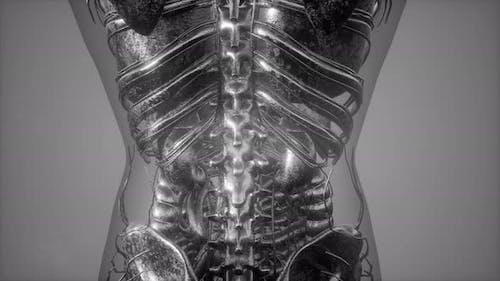 Radiographic Scan of Homan Bones