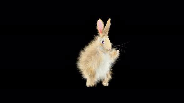 Thumbnail for Rabbit Dancing 4K