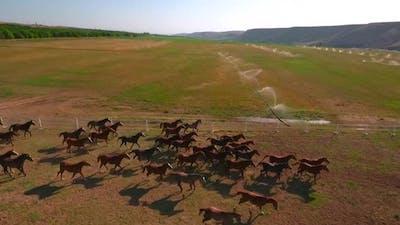 Horses Running On A Ranch