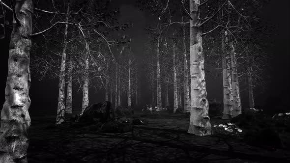 Thumbnail for Dark Aspen Forest 4k