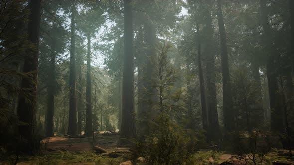 Thumbnail for Sonnenuntergang auf dem Riesenwald, Sequoia National Park, Kalifornien