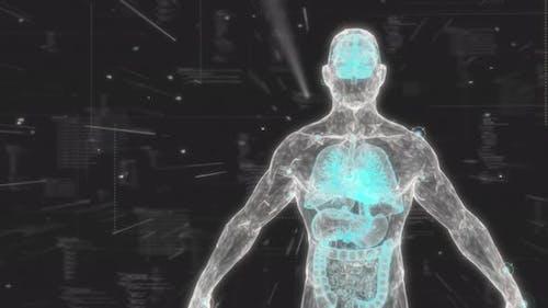 Human Anatomy X-Ray