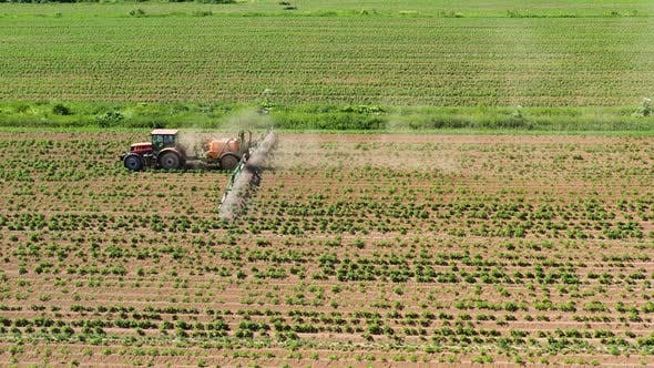 Tractor Spraying Pesticides on Vegetable Field with Sprayer
