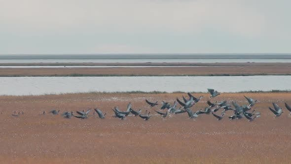 Flock of birds rising up to the air