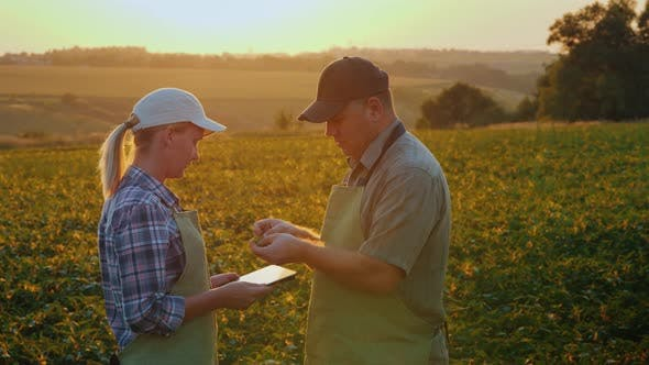 Cover Image for Two Farmers Work in the Field at Sunset, Talk and Use the Tablet