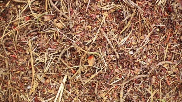 Run of Ants Close-up. Anthill, Population of Ant City.