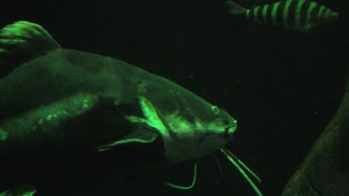 UNDERWATER - CHALLENGER FISH