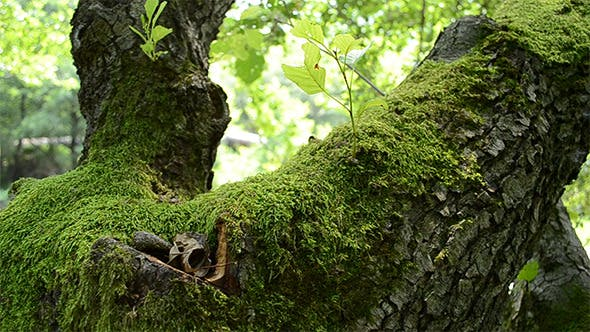Thumbnail for Green Moss on Tree