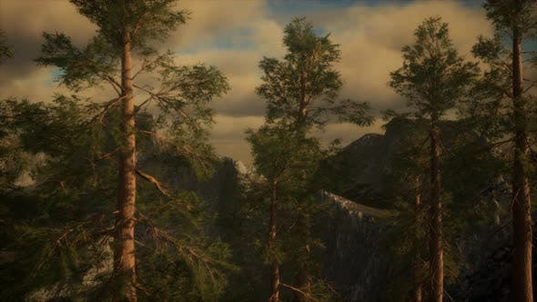 Thumbnail for Fog and Pine Trees on Rugged Mountainside and Coming Storm