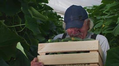 Friendly Elderly Farmer Smelling Cucumbers