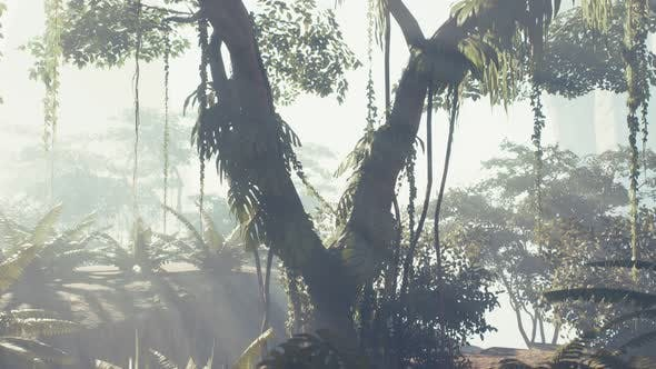 Thumbnail for Misty Jungle Rainforest in Fog