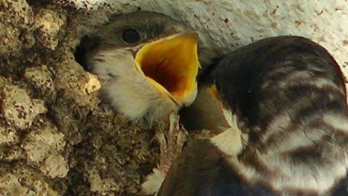 Mother Bird Feeding Baby birds