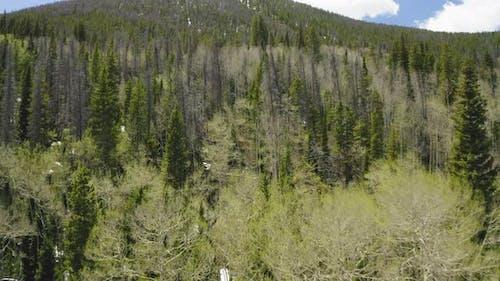 Closeup Aerial Flyover of Pine and Aspen Trees on a Mountain in Colorado (Frisco, Colorado)