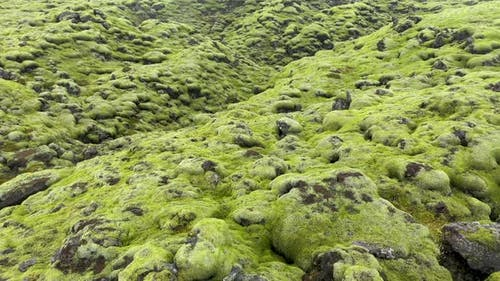 Flying Over Eldhraun Lava Field in Iceland