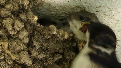Mother Bird and the Baby Bird