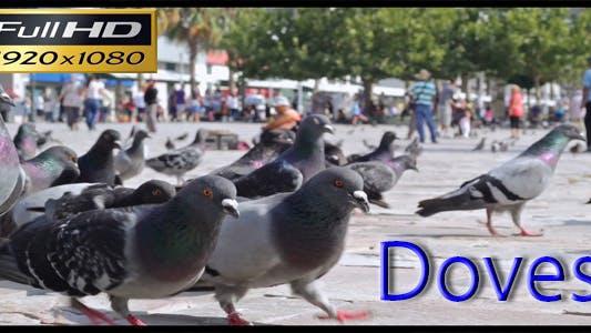 Thumbnail for Doves