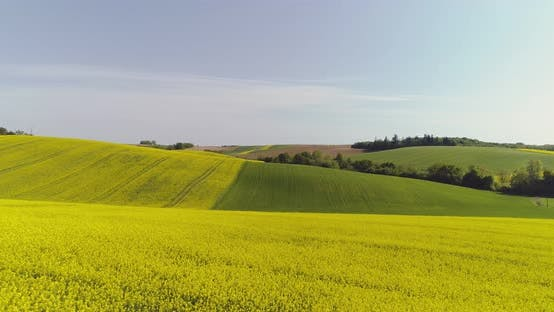 Thumbnail for Scenic View of Canola Field Against Sky