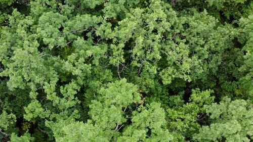 Forest from above. Aerial drone shot above green trees