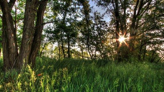 Thumbnail for Zeitraffer der Natur Frühlingswald