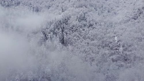 Fly On The Snowy And Foggy Mountain Spruce Forest