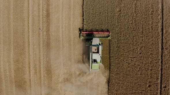 Thumbnail for Aerial Drone Top View Harvesting Machine Cutting Down Ripe Wheat Crop Ready To Be Transported