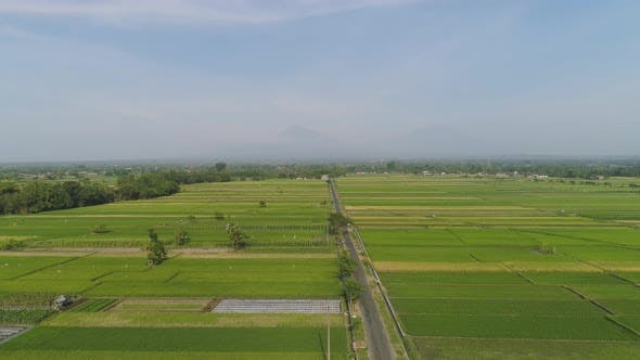 Thumbnail for Rice Field and Agricultural Land in Indonesia