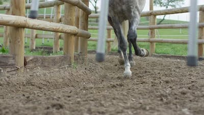 The horse hooves