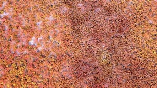 Vidéo d'orientation verticale: herbe rouge. Algues rouges au fond d'un lac asséché