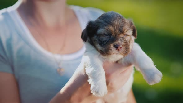 Thumbnail for Happy Owner Holding a Cute Puppy