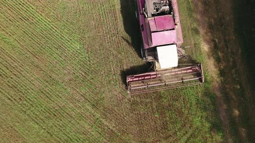 Harvester of a Combine Harvester Reaping Grain Crops