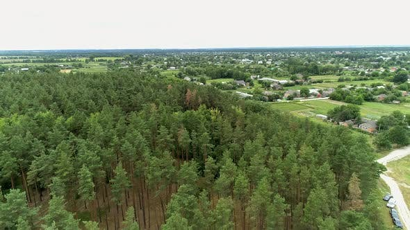Aerial view of a beautiful young pine forest on a summer day near the village, Landscapes