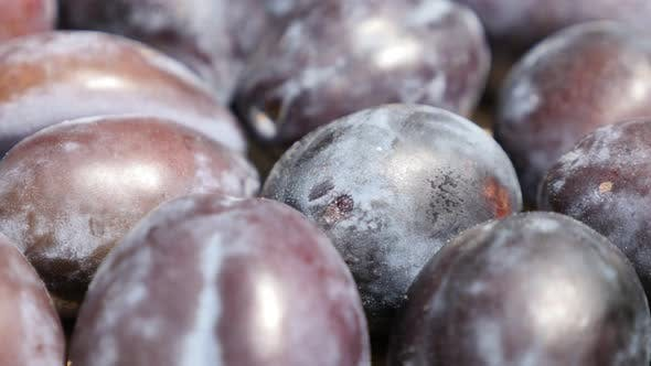 Thumbnail for Shallow DOF common plum Prunus domestica slow tilt 4K video