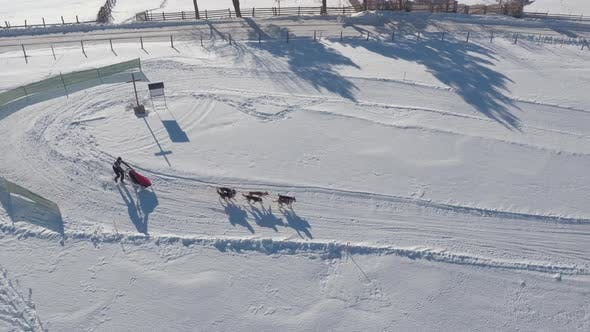 Thumbnail for Aerial view of a dog sled riding on a curvy road