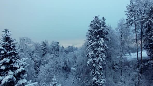 Thumbnail for December Christmas Winter Weather Scenery Outdoors