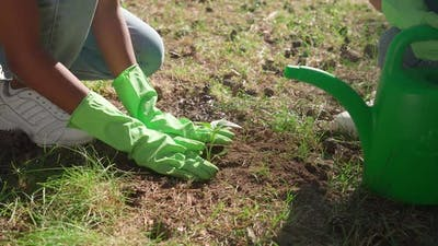Females Ecoactivist Planting Plants Volunteer Work for Nature Conservation Landscaping of Nature