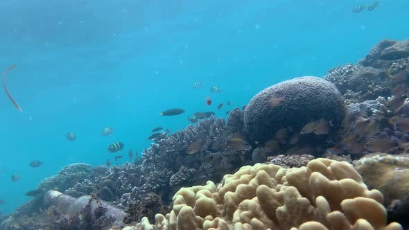 Thumbnail for Underwater Ecosystem with Diverse Tropical Fishes and Coral Reefs.